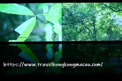 f:id:travelhongkongmacau:20190423103903j:plain
