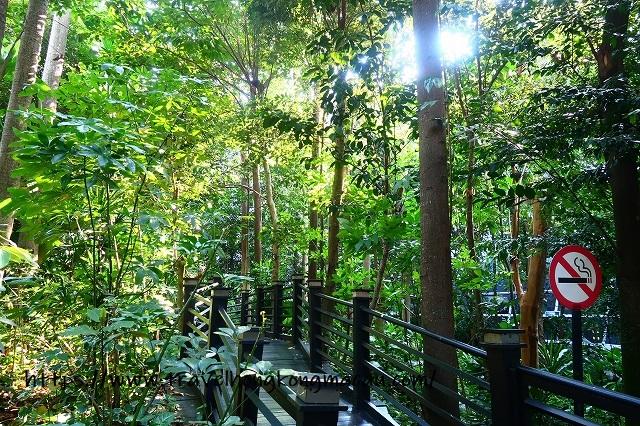 f:id:travelhongkongmacau:20191110222137j:plain