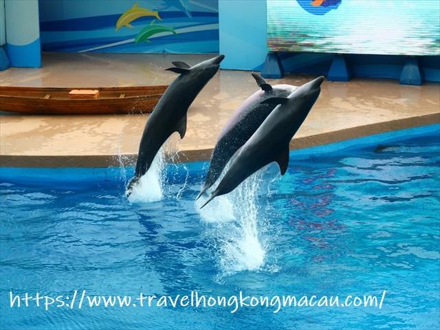 f:id:travelhongkongmacau:20200115162411j:plain