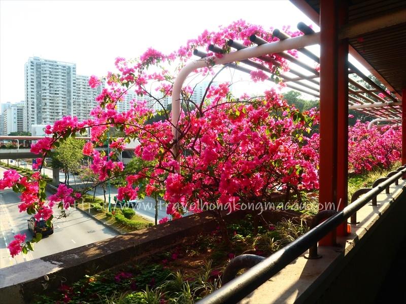 f:id:travelhongkongmacau:20210218180829j:plain