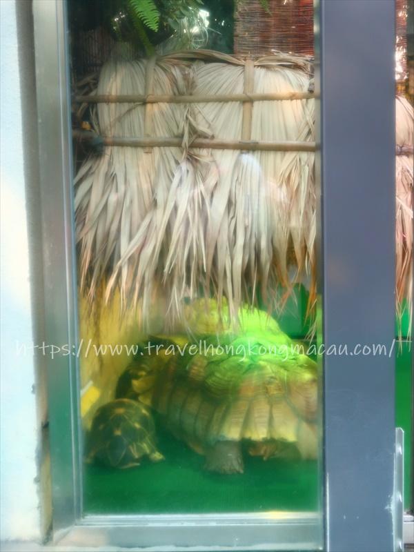 f:id:travelhongkongmacau:20210218182004j:plain