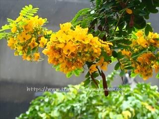 f:id:travelhongkongmacau:20210305211251j:plain