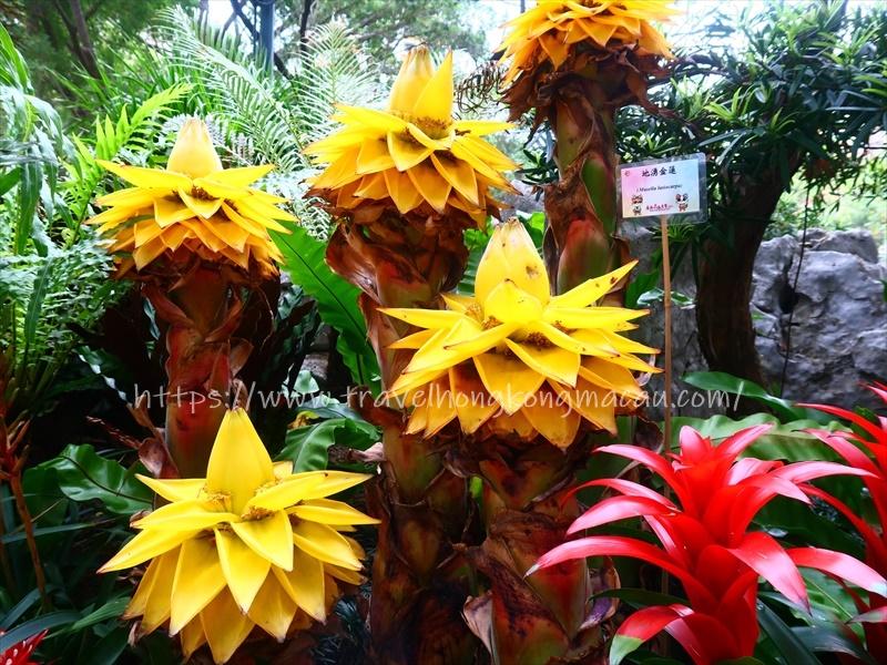 f:id:travelhongkongmacau:20210312125633j:plain