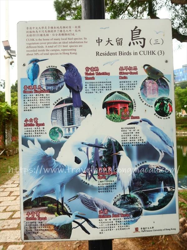 f:id:travelhongkongmacau:20210319131426j:plain