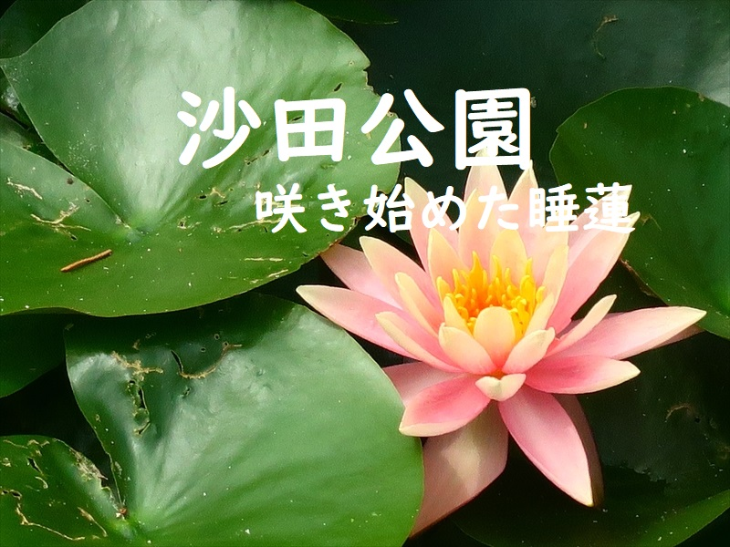 f:id:travelhongkongmacau:20210415001745j:plain