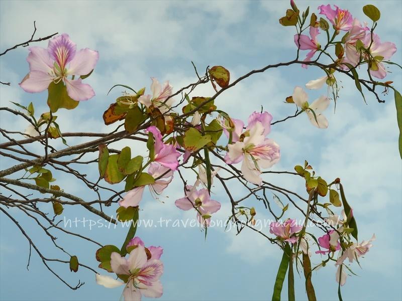 f:id:travelhongkongmacau:20210415003950j:plain