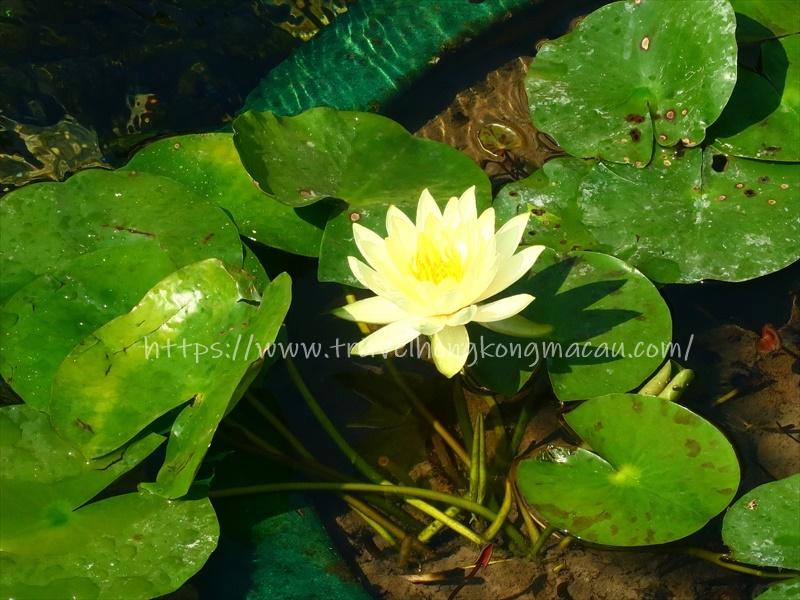 f:id:travelhongkongmacau:20210514112318j:plain