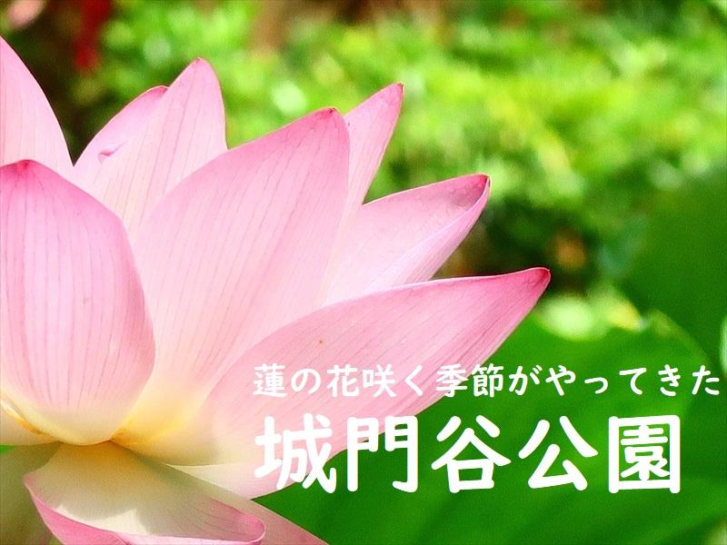 f:id:travelhongkongmacau:20210520181726j:plain