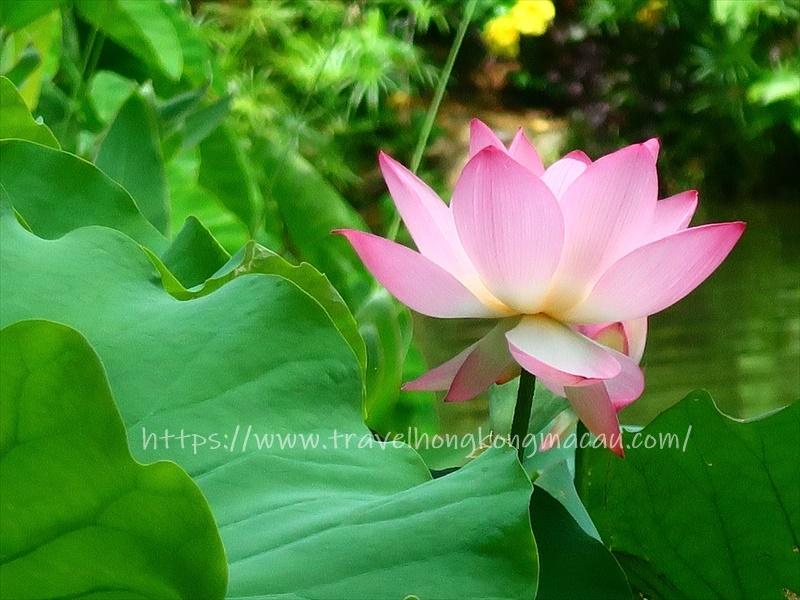 f:id:travelhongkongmacau:20210520183618j:plain