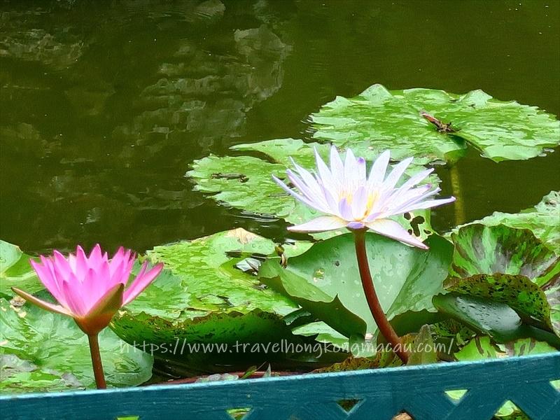 f:id:travelhongkongmacau:20210604143950j:plain
