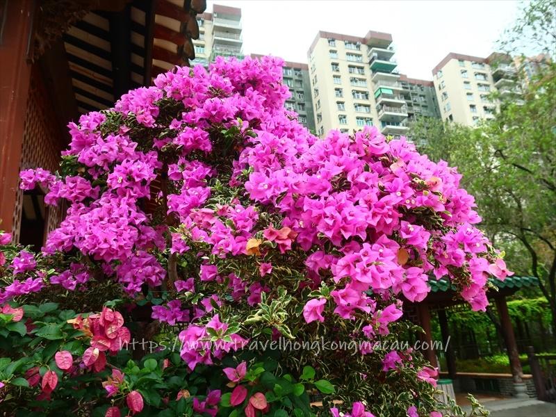 f:id:travelhongkongmacau:20210604144100j:plain