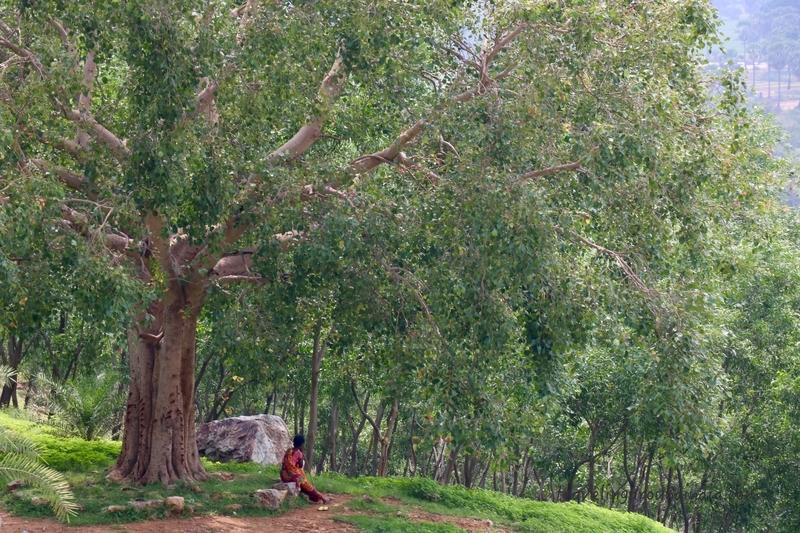 f:id:travellingaroundindia:20200119160519j:plain