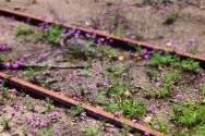 花の咲いた線路