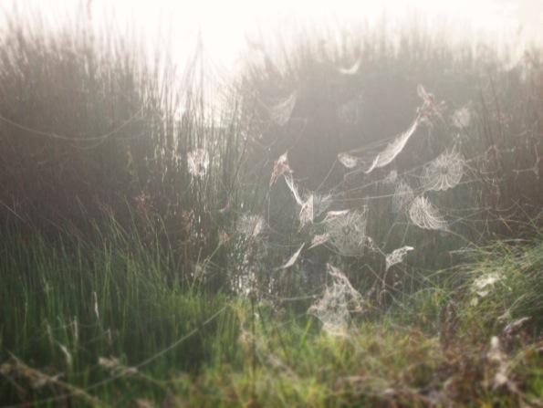 大量の蜘蛛の巣