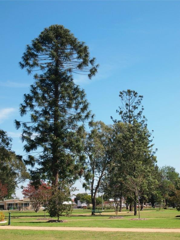 Warwickのめずらしい形をした木