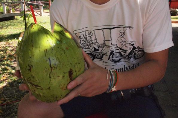 超大きなココナッツ