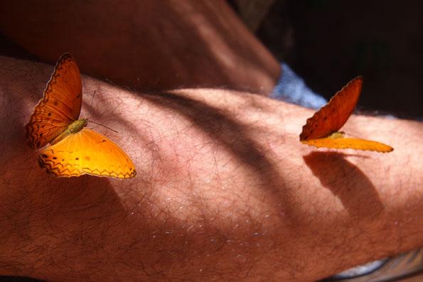 足にとまる蝶々