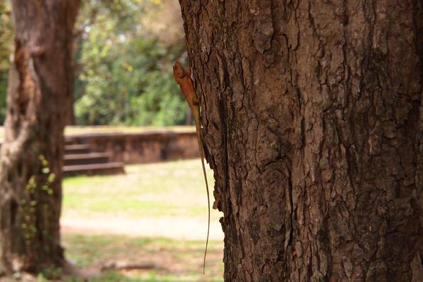 ロリュオス遺跡群バコンのトカゲ