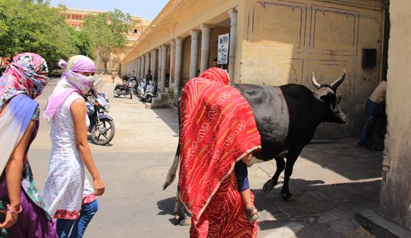 ジャイプールのインド人女性