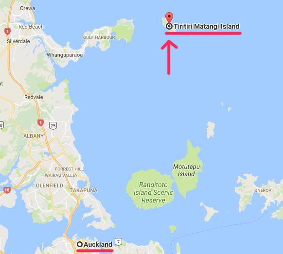 ティリティリ・マタンギ島(Tiritiri Matangi Island)