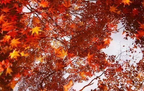 紅葉が美しい雨の「雲場池」