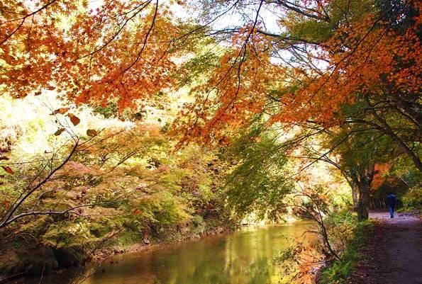 養老渓谷の中瀬遊歩道の紅葉