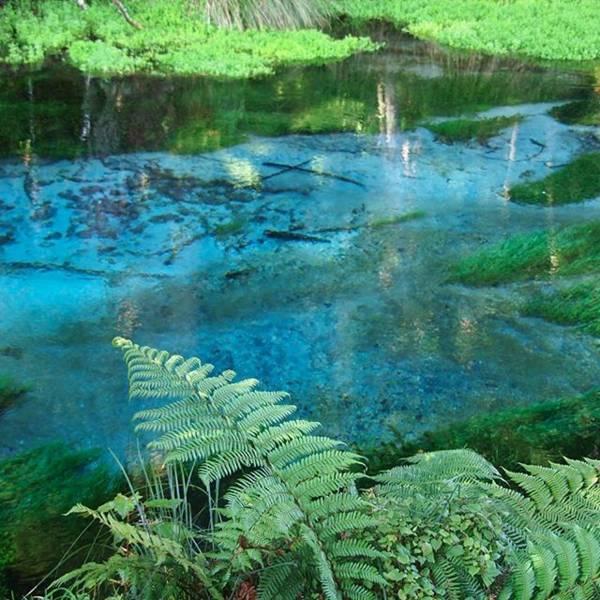 ハムラナ・スプリングス (Hamurana Springs)