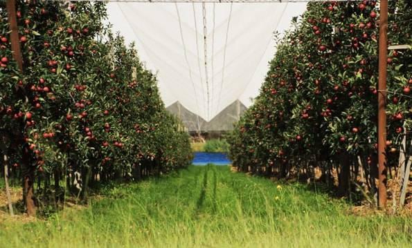 りんごのファーム