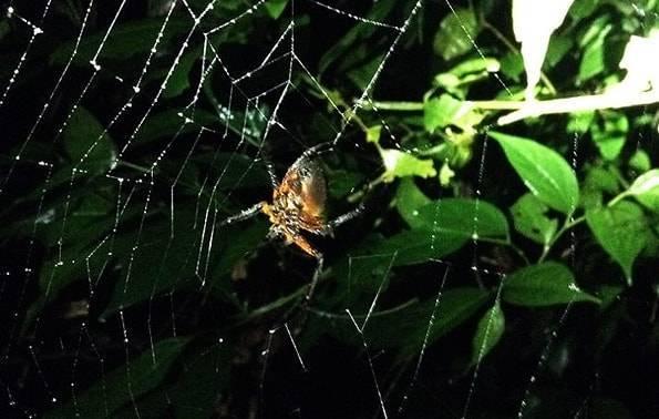 コスタリカの蜘蛛