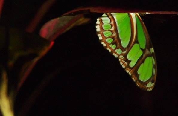 コスタリカの蝶々