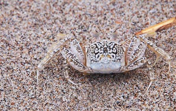 コスタリカの蟹
