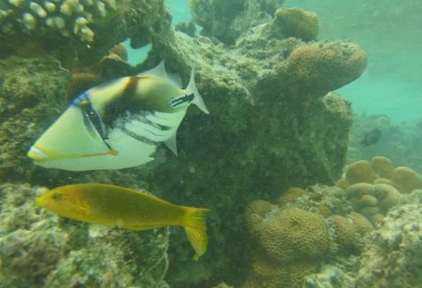 ラロトンガ島の熱帯魚