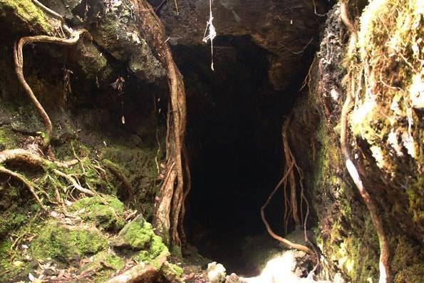 オークランド・ランギトト島・溶岩窟(Lava Caves)