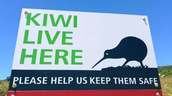 オークランドのロトロア島 (Rotoroa Island)にキウイがいる
