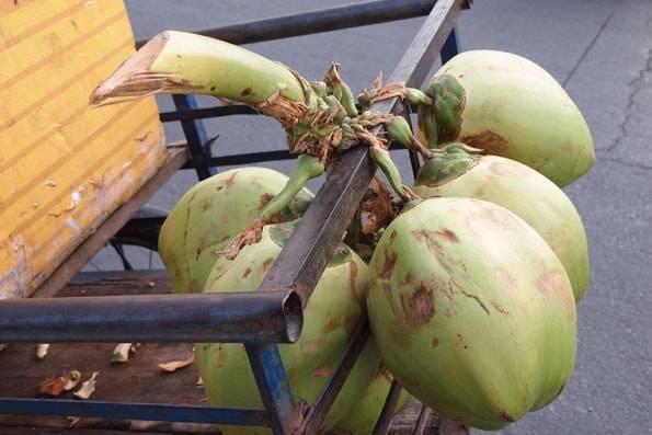 カンボジアのココナッツ