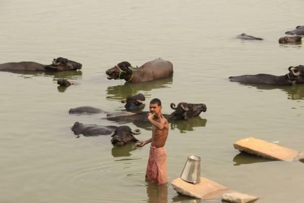 インド・バラナシのガンジス川で歯磨きをする男性