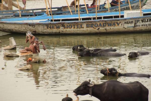 インド・バラナシのガンジス川で体を洗う