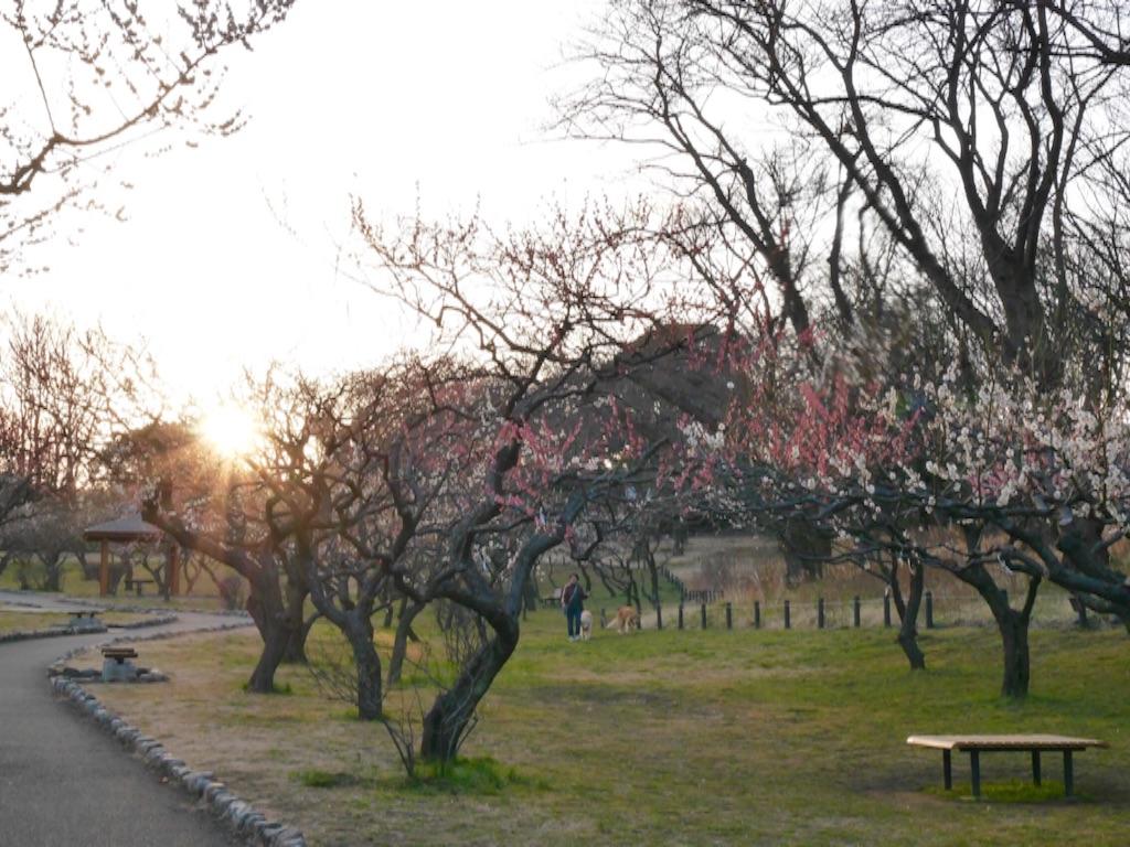 f:id:travelyokohama:20170218231410j:image