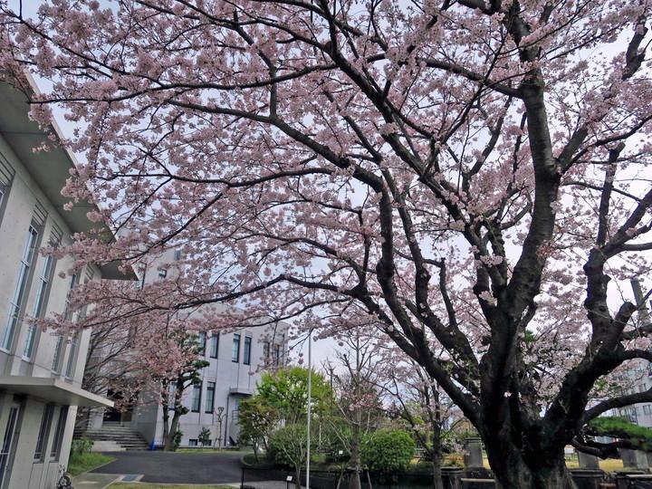 f:id:travelyokohama:20170502001036j:plain