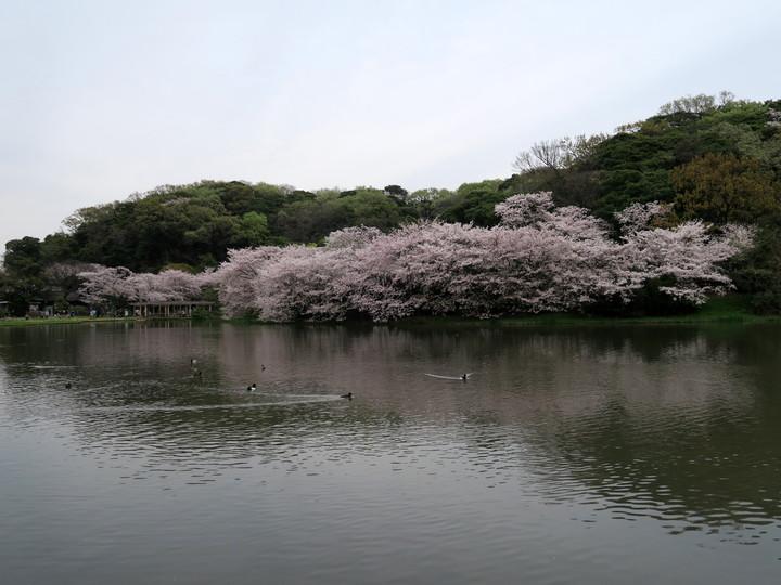 f:id:travelyokohama:20170502004157j:plain