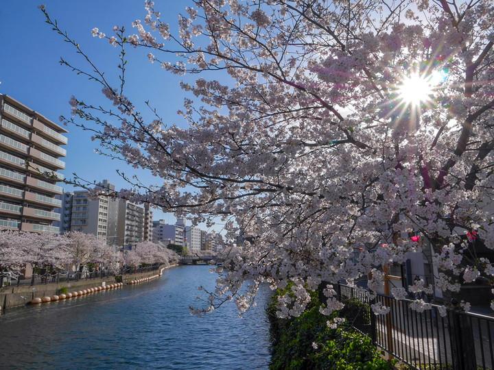 f:id:travelyokohama:20190409015852j:plain