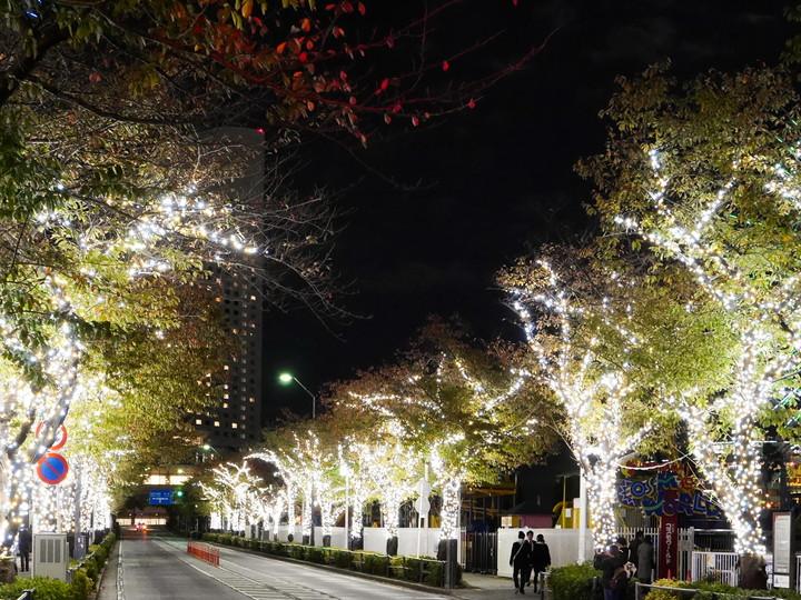 ヨコハマミライト ~みらいを照らす、光のまち~ さくら通り