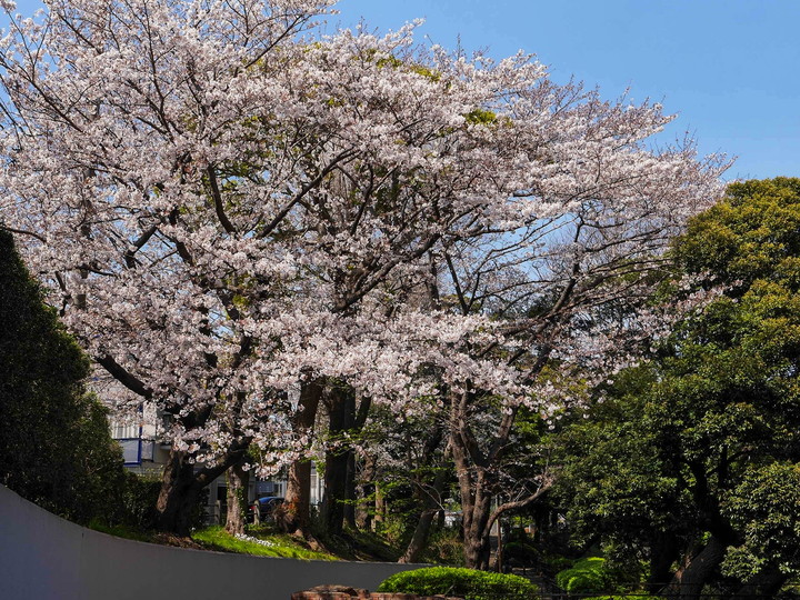 横浜 山手 エリスマン邸