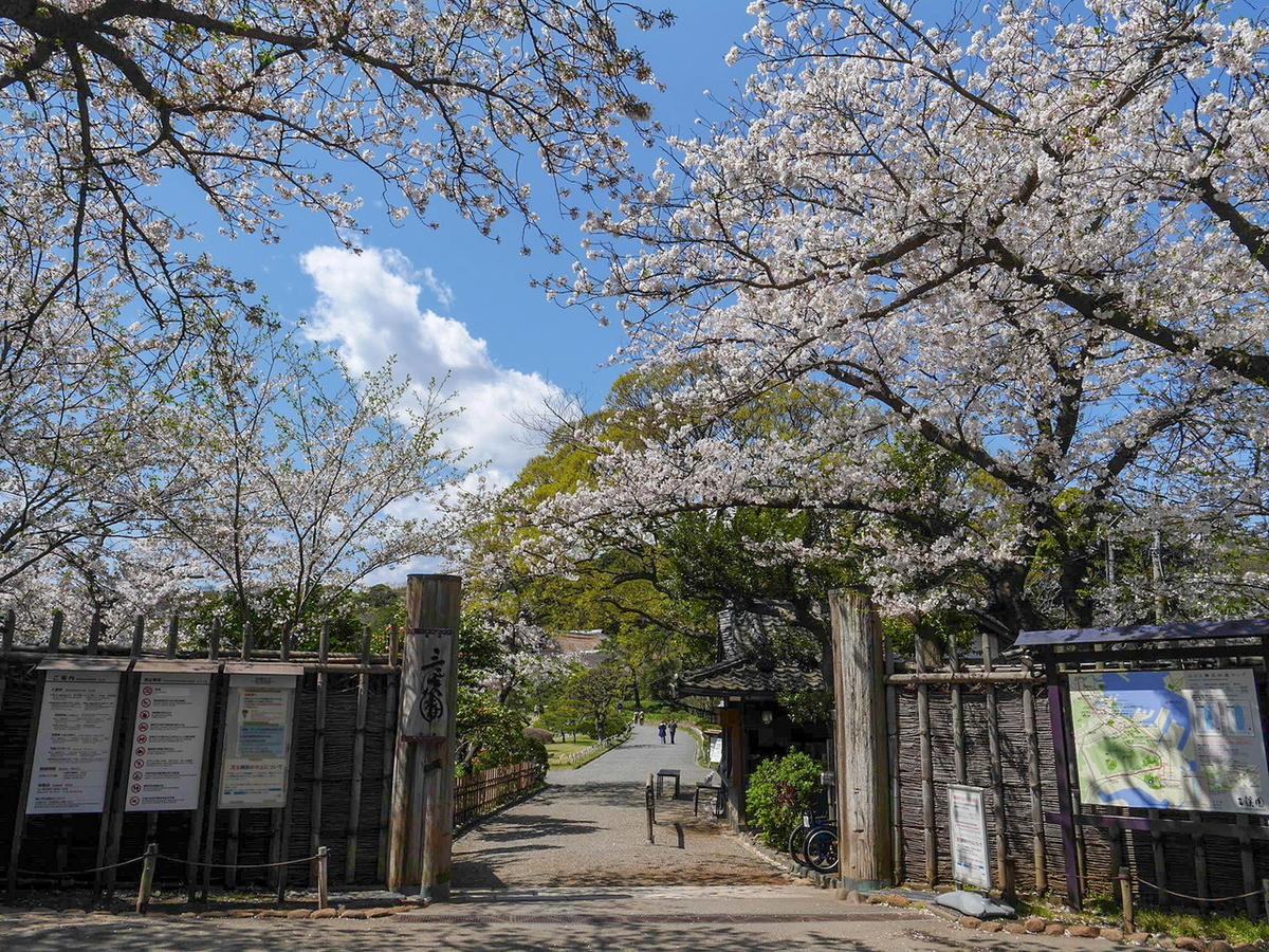 三溪園 2020年 桜 花見