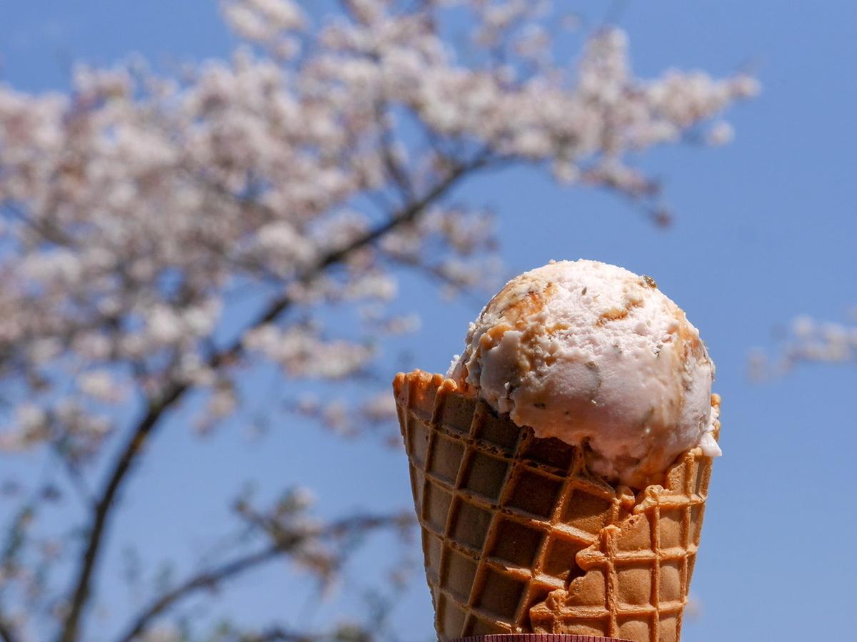 三溪園茶寮 さくらアイスクリーム(350円)