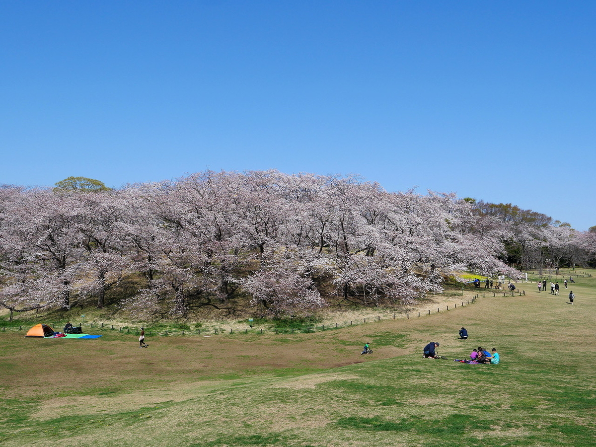 根岸森林公園 2021年桜 お花見