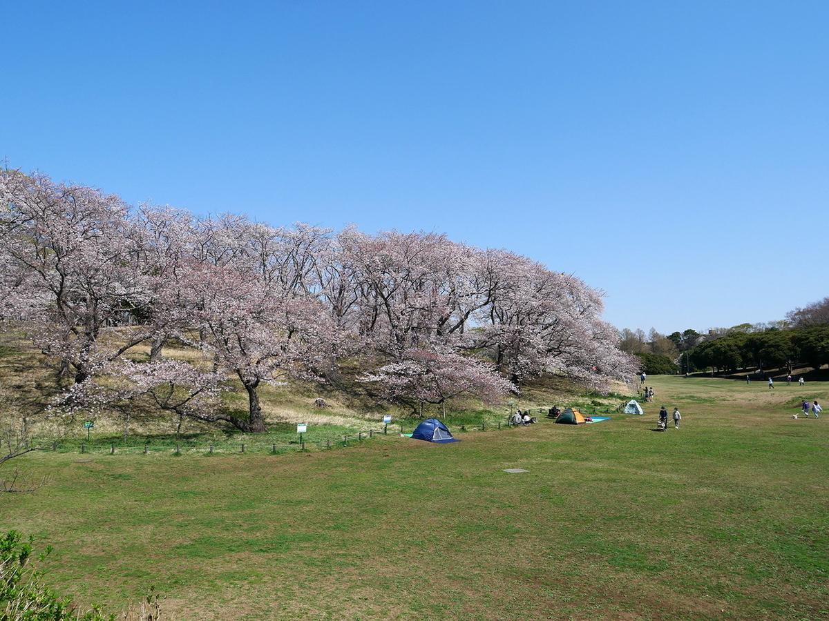 根岸森林公園 2021年桜