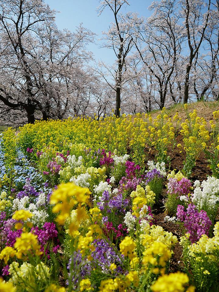 かわいらしい花畑