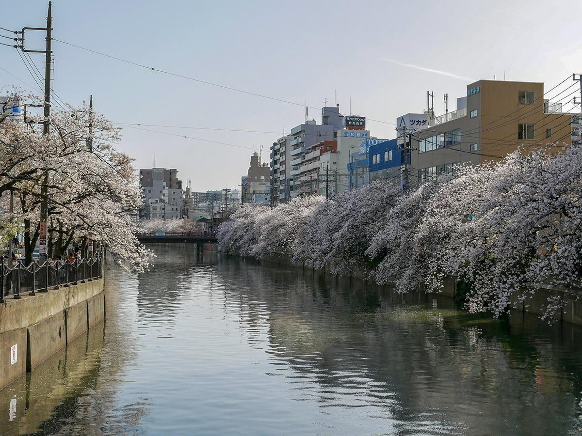 大岡川プロムナード 2021年桜