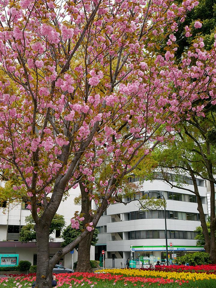 横浜公園(2021年4月6日撮影)